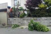 お庭の樹木の伐採中です。